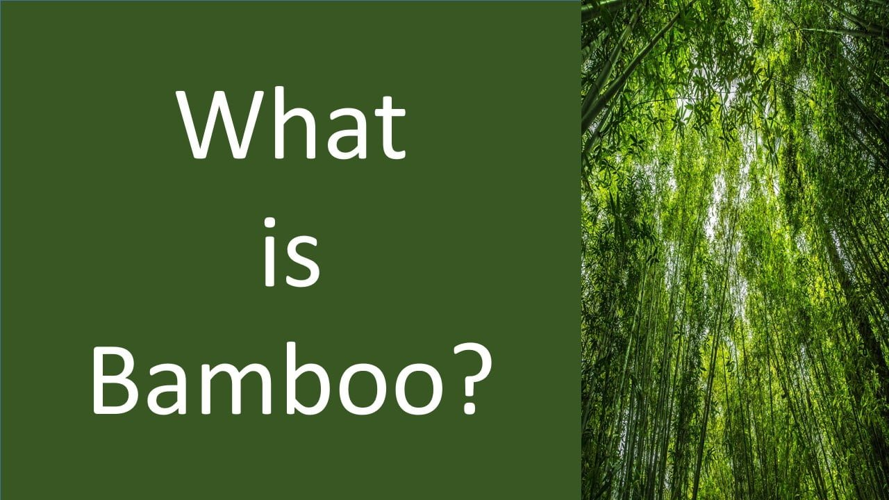 what is bamboo